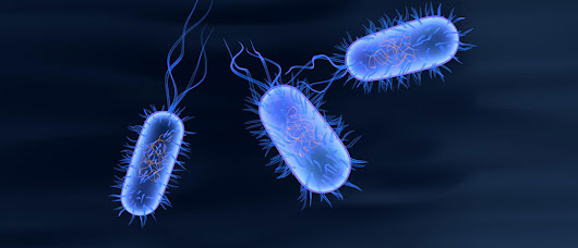 The Microbiome: Brave New World for Health Care -- and Biotech - Knowledge@Wharton
