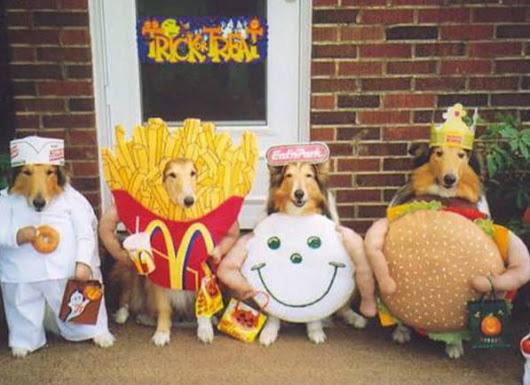 static.brit.co.s3.amazonaws.com/wp-content/uploads/2012/09/funny-pets-halloween-costumes-dogs-dressed-up-in-fast-food-outfits.jpg