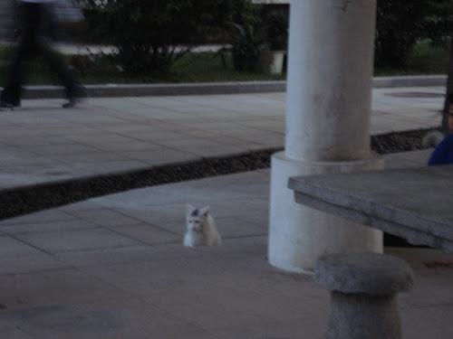 Cats in Shenyang, China _ 0135