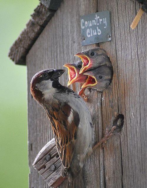 birds, babes (2)