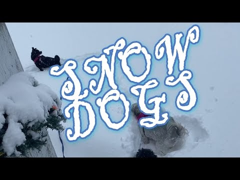 2021 Blizzard Dumping Dogs  - This Years Big Trump Dump!