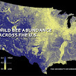 Wild Bee Decline Threatens US Crop Production - North Branch Landscape Company