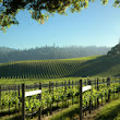 Six Great American Wine Country Harvest Getaways