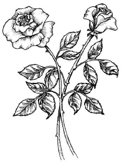 Sketsa Gambar Bunga Gambar Pemandangan Clipartsco