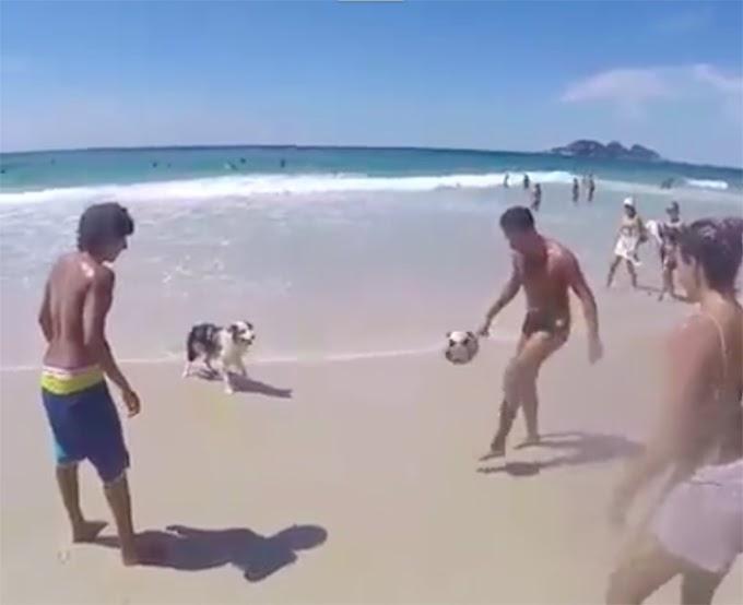 Scotch, el famoso perrito futbolista que sorprende a millones por su talento con el balón