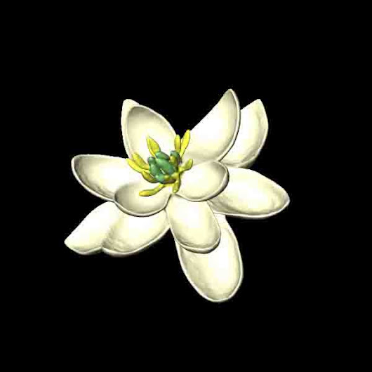 What flowers looked like 100 million years ago | Geology Page