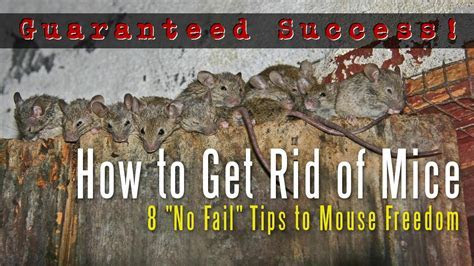 How to Get Rid of Mice in a House, Attic, Apartment, Garage, Etc.   YouTube