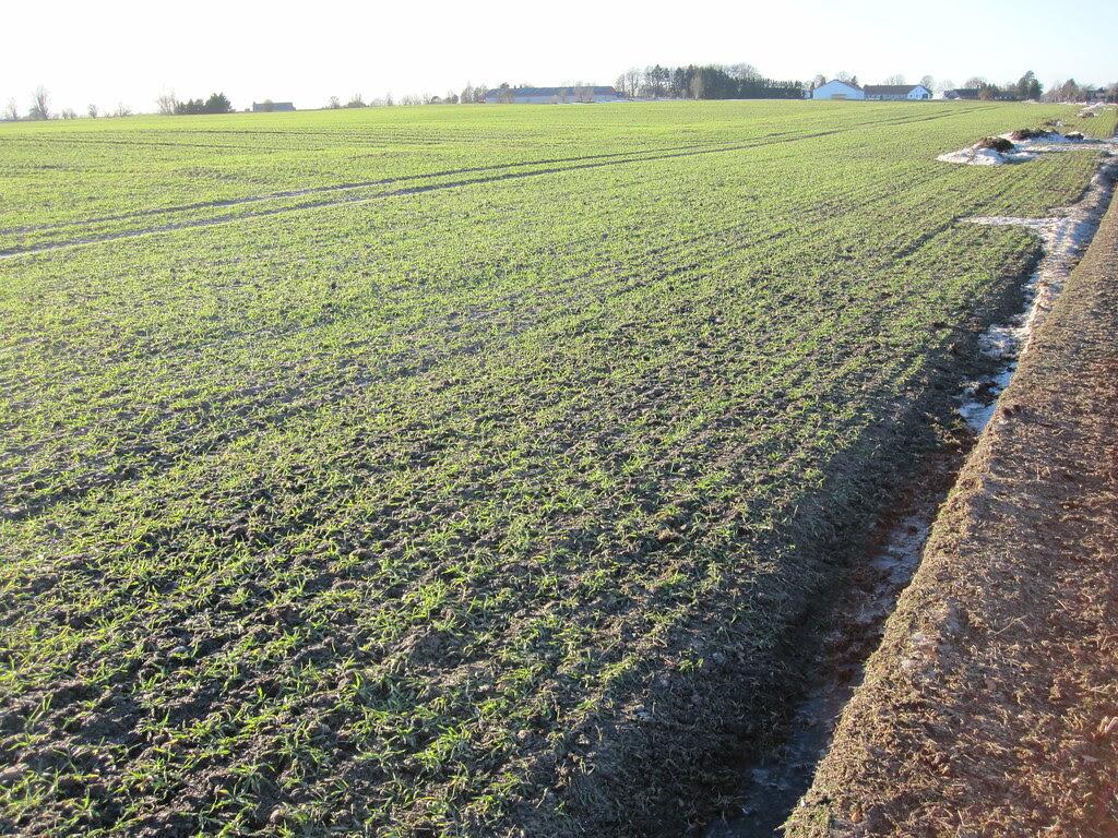 Field in winter sun