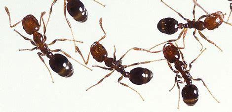 Millipede bug spray