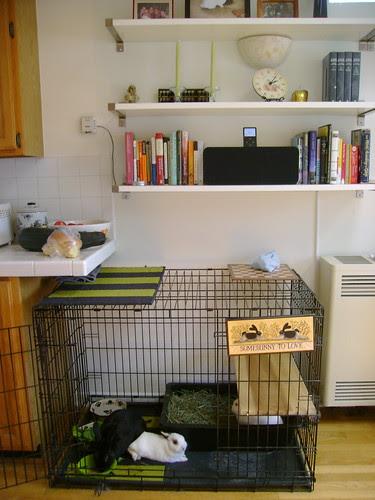 bunnies at home