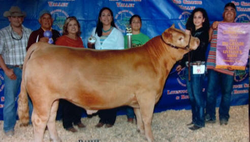 AOK Show Cattle | JHA RANCH - George West, Texas