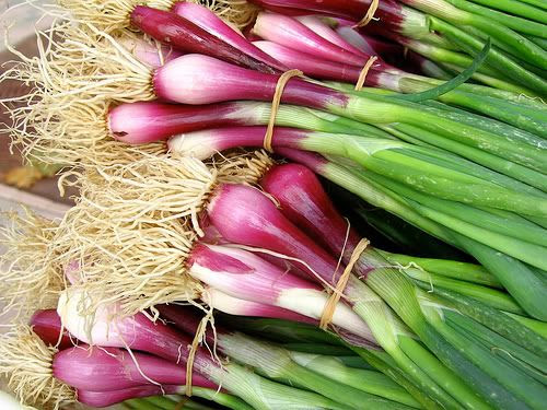 Purple Green Onions
