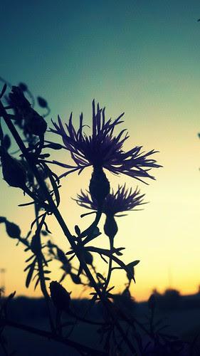 Sunrise & Silhouette.3