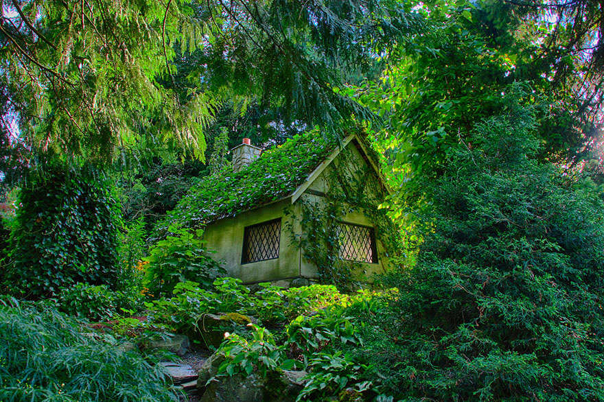 Hidden Forest House