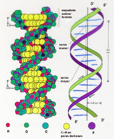 Biologia2bachcamp ácidos Nucleicos
