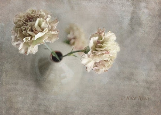 Flower Photography Neutral Decor Carnations by KateRyanFineArt