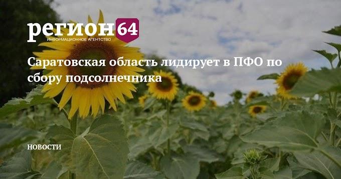 Саратовская область лидирует в ПФО по сбору подсолнечника