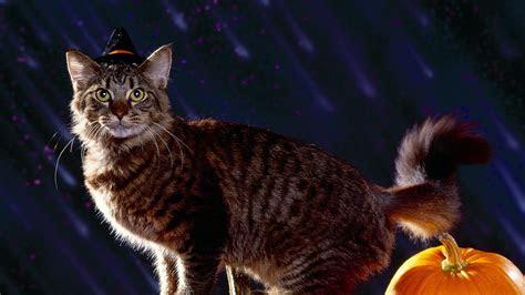 halloween cat wallpaper wallpapertag