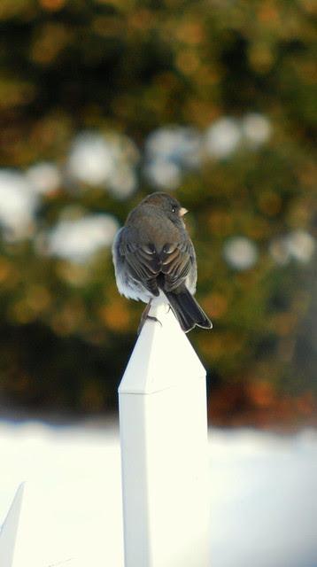Birdfeeder 16jpg