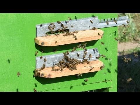 Обо всём: Опыт естественного содержания пчёл на приусадебном участке