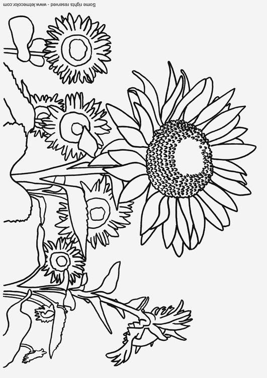 Dibujo Para Colorear Girasoles Img 9791