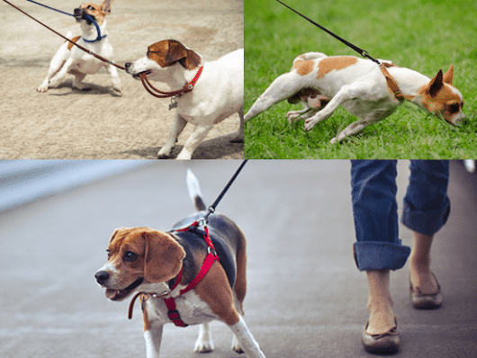 Walk Your Dog: How Often, How Long, and How Far? - Dos and Don'ts