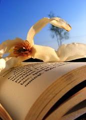 Magnolia book: blue