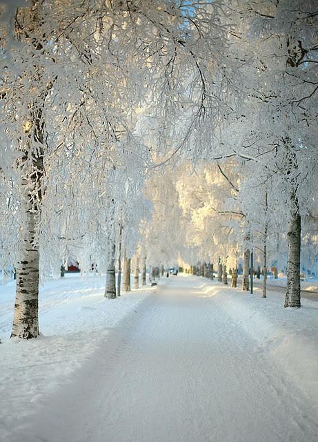 Snowy Morning, Sweden