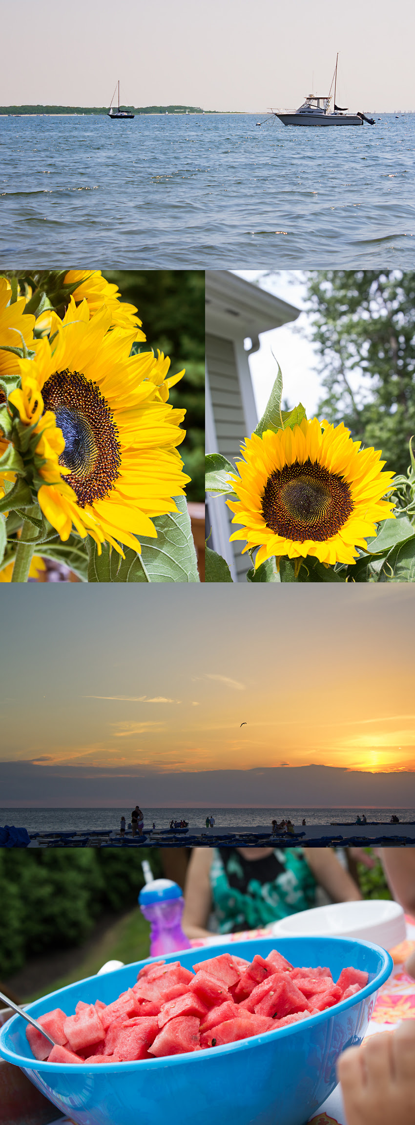 Summer sunflower cape cod waves boat fruit salad watermelon sunset collage storyboard