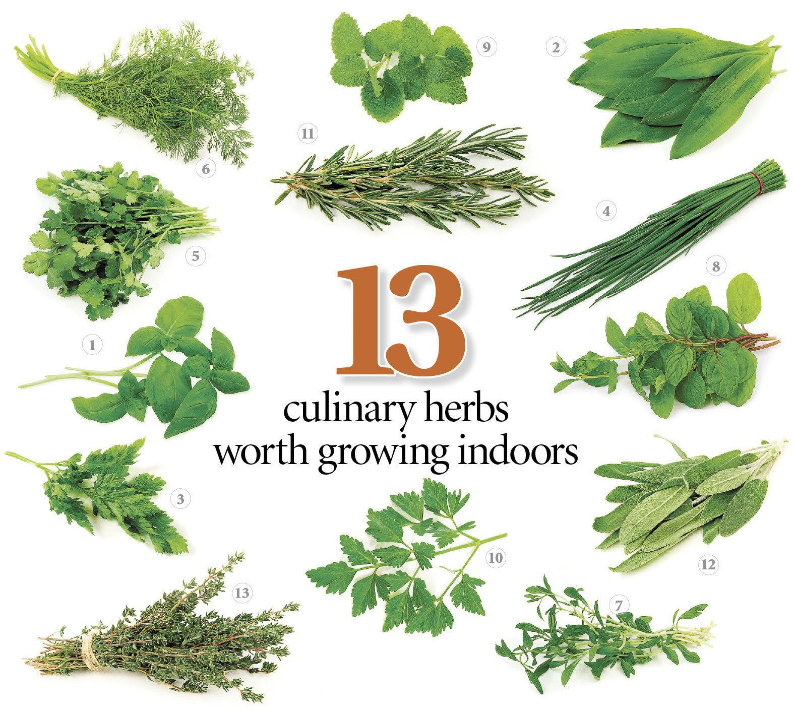 Fresh Kitchen Herbs