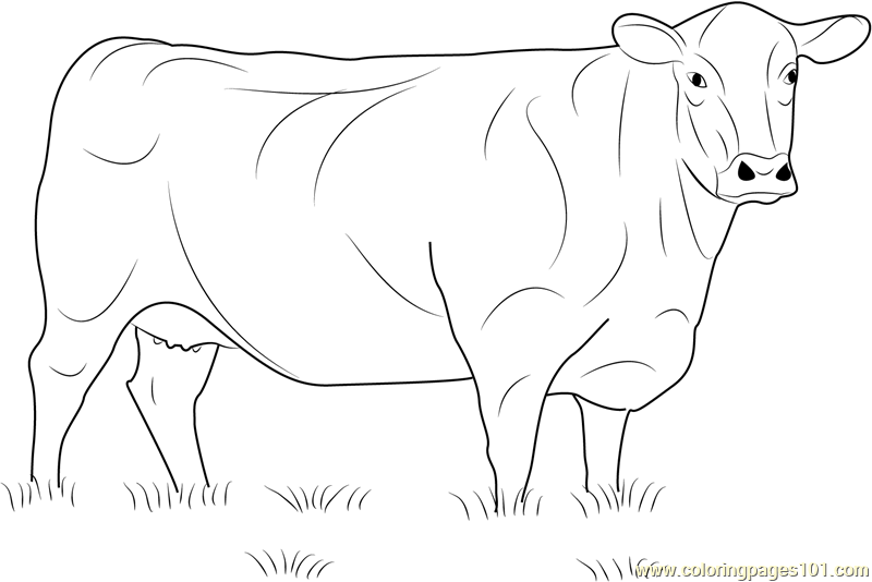 Cool Realistic Cow Coloring Pages Anyoneforanyateam