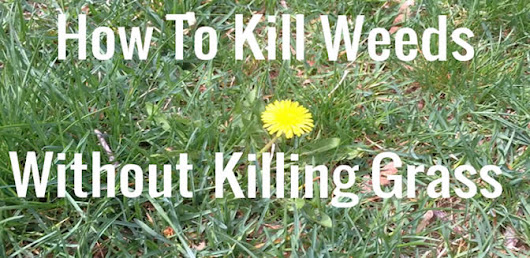 How to Get Rid of a Lawn Full Of Weeds - How Does Your Garden Mow