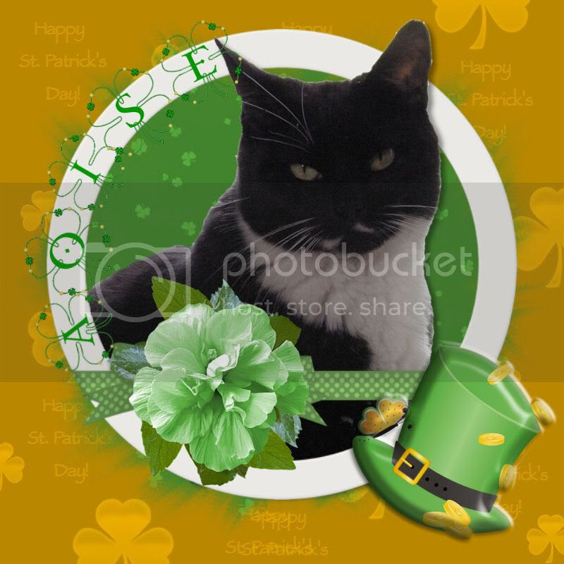 Tuxi Cat,Bi-colored Cat,St. Patrick's Day