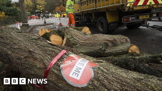 Council calls temporary halt to tree work
