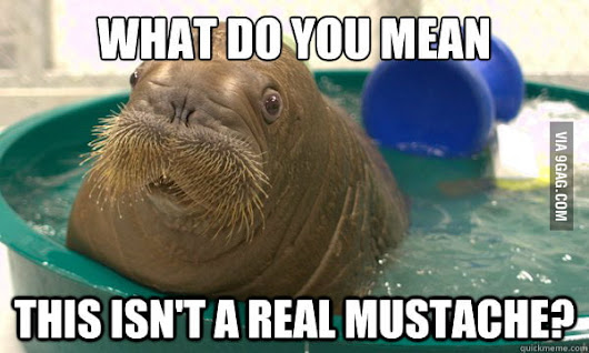 "Image: Confused Walrus on his ""mustache"" - 9GAG"