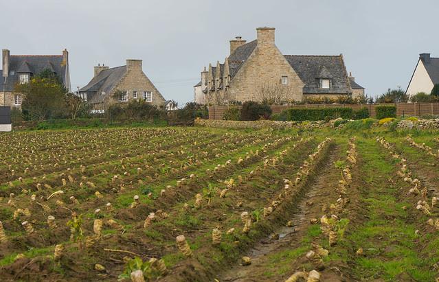Brittany-2-2.jpg