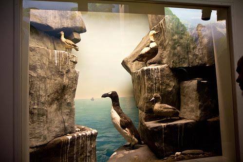Display of extinct birds