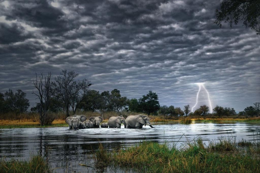 O lado colorido da África selvagem por Alex Bernasconi 18