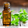 Oil of the week #4 - Peppermint Oil | Live Well with Essential Oils