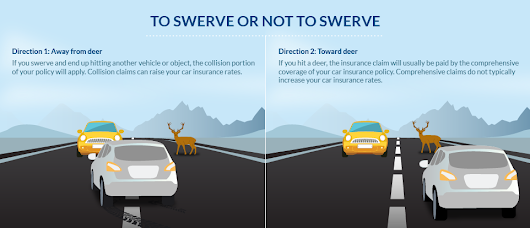 Don't swerve! Better to hit a deer - Katherman Briggs & Greenberg