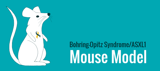 Bohring-Opitz syndrome in Mice
