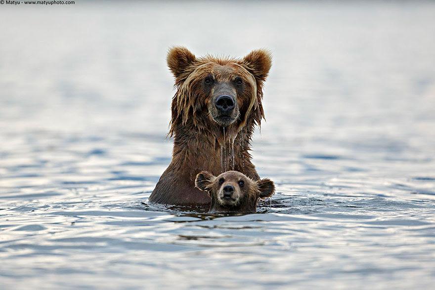 http://www.boredpanda.com/cute-animal-parenting/?image_id=animal-parents-9.jpg
