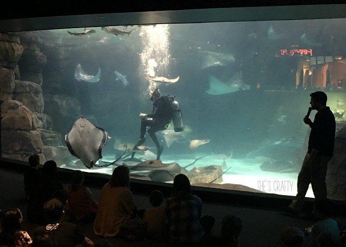 aquarium, things to do in gatlinburg, dive show, feed sting rays