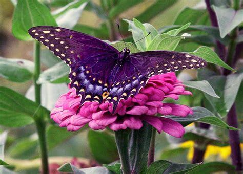 HDwallpapers of Butterflies ~ Wild Life