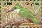 Amazon Kingfisher Chloroceryle amazona