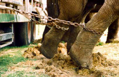 Torture ala circo