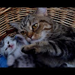 Mother Cat Coco and Her Kittens Show 10 Tips to Raise Happy Children
