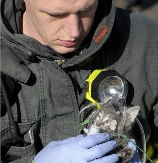 Διάσωση ζώων (11)
