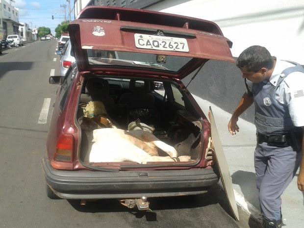 Boi estava amarrado no porta-malas do veículo  (Foto: Divulgação/ Polícia Rodoviária)
