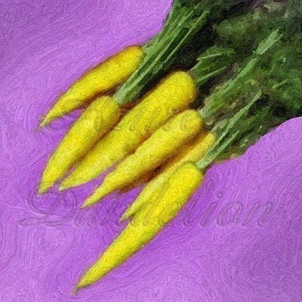 Heirloom Amarillo Yellow Carrot